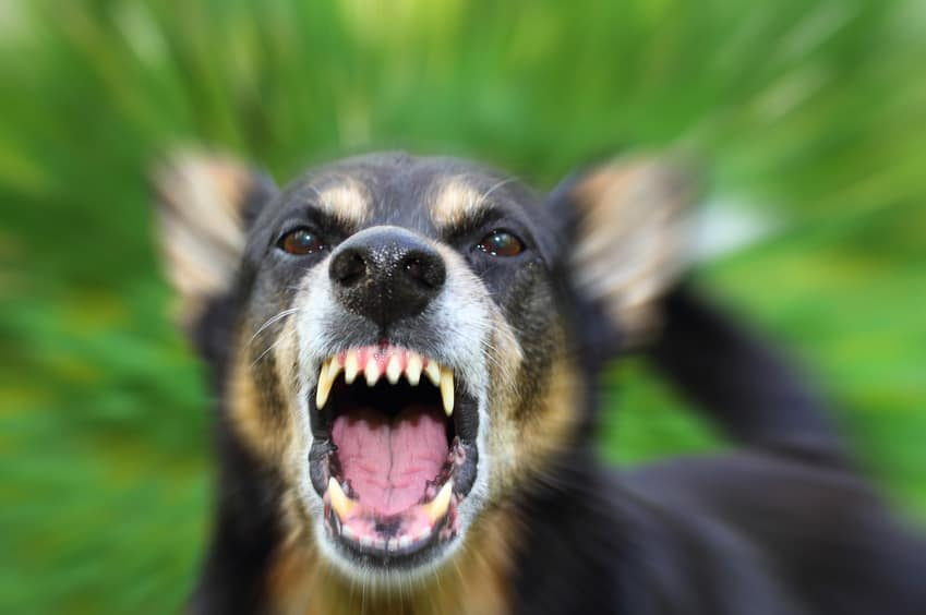 What Happens If Your Dog Bites Someone On Your Property?
